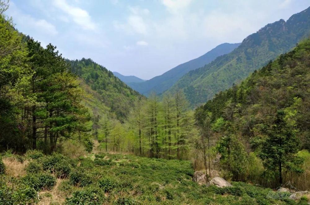 安吉龍王山09