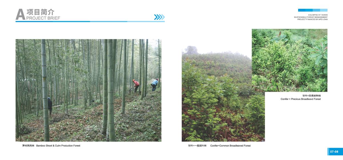 法国开发署贷款湖南森林可持续经营项目画册6