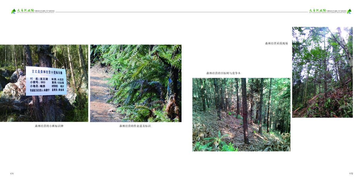 近自然之路-88拷贝