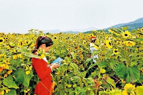 新兴县-六祖镇5