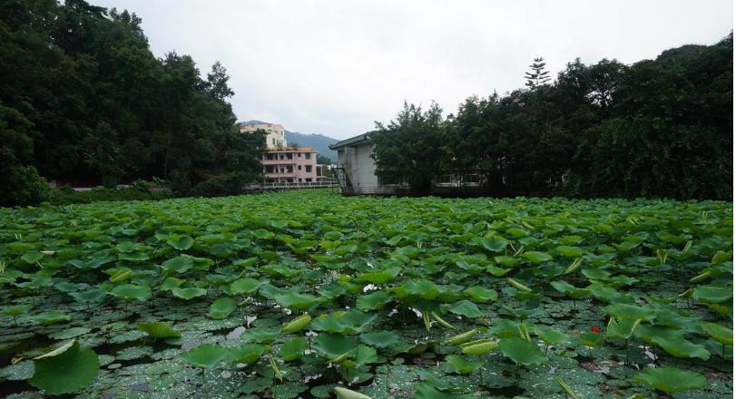 新兴县-水台镇4