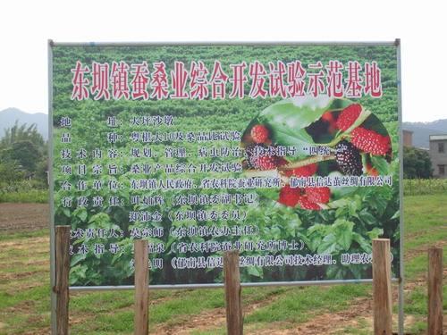 郁南县-东坝镇1