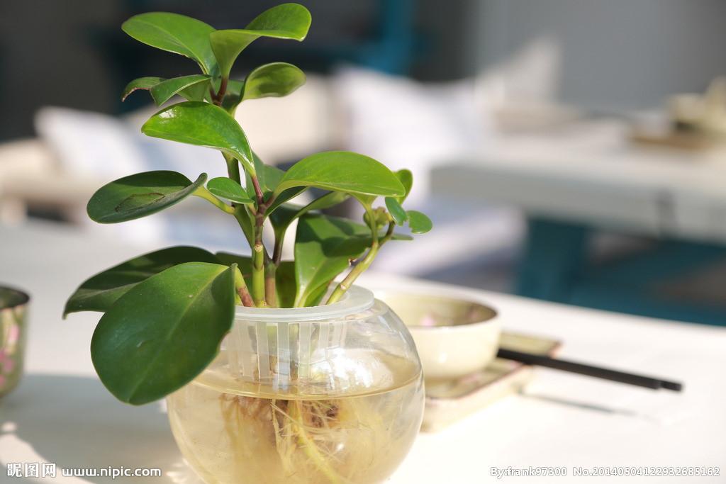 会引起叶黄的现象;施肥过多,盆栽植物吸收不了把根系烧伤,不能吸收