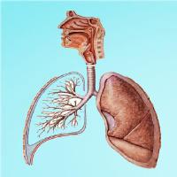 呼吸健康管理