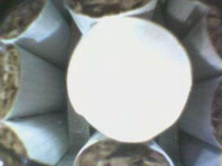 WDT下煙庫單煙支成像檢測與剔除裝置V3.0-9-7