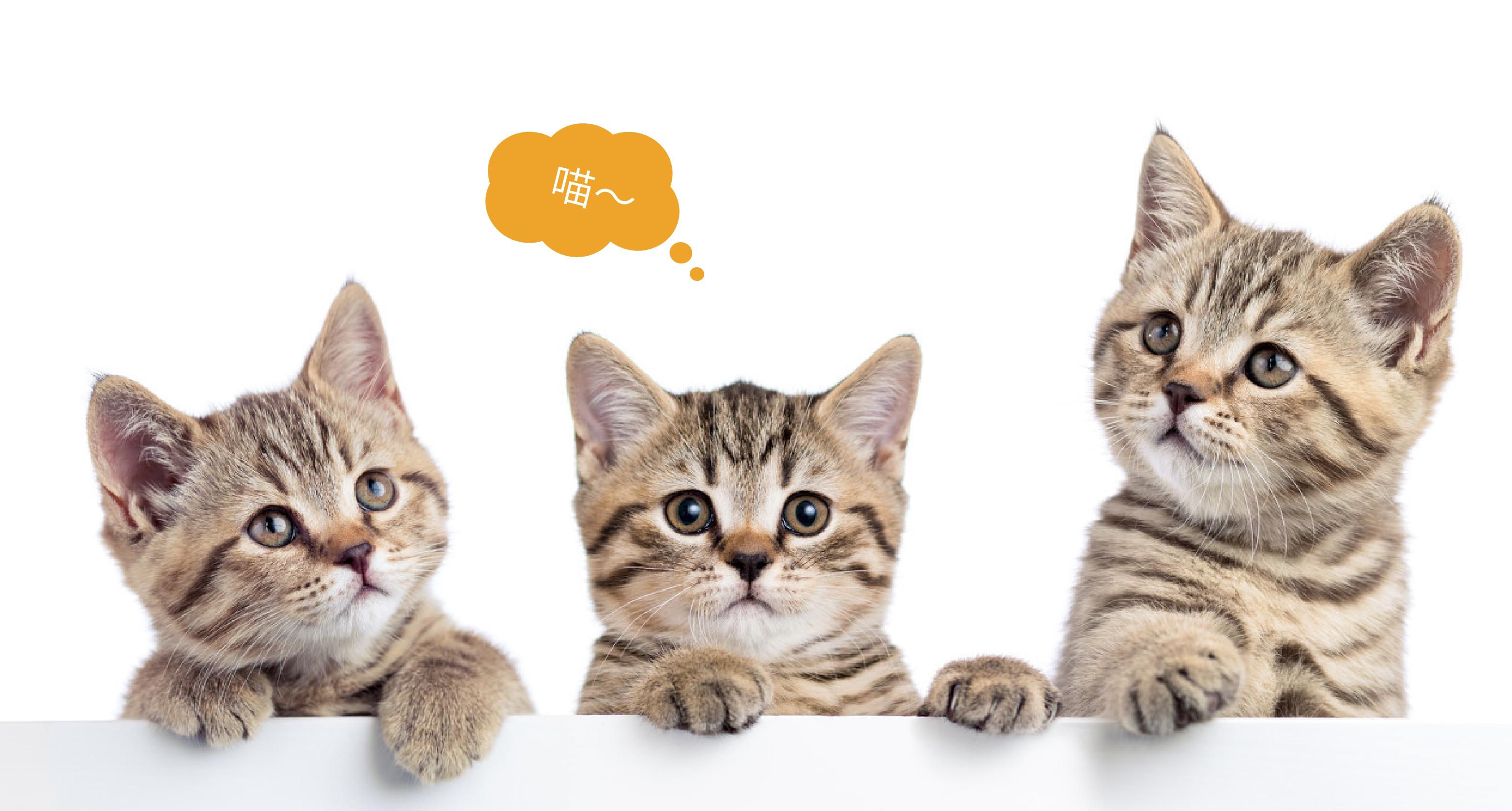 貓公爵網站設計