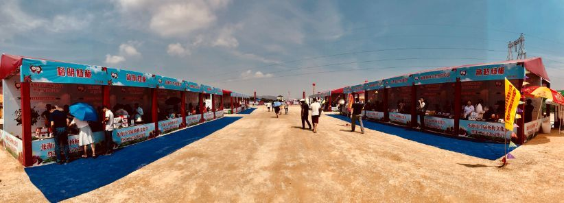 龙海市首届杨梅文化节3