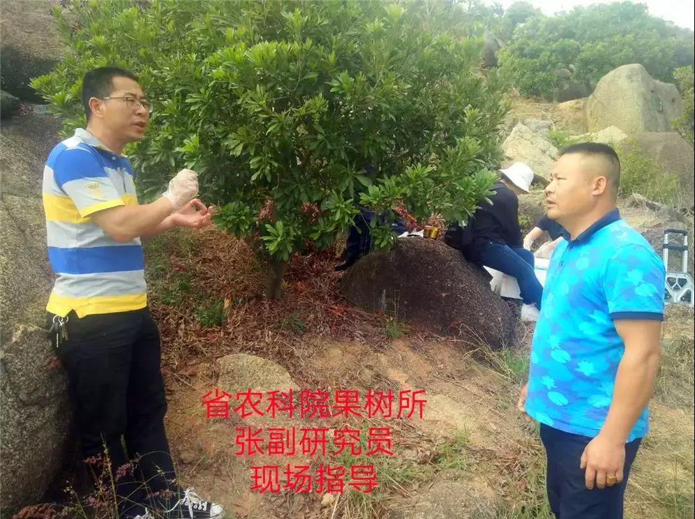 8.杨梅果树现场指导