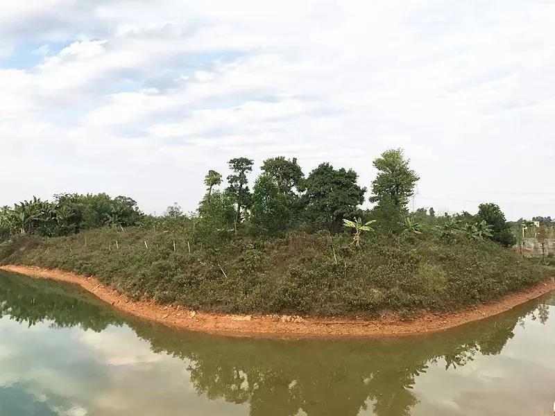 防野生设计的野龟岛