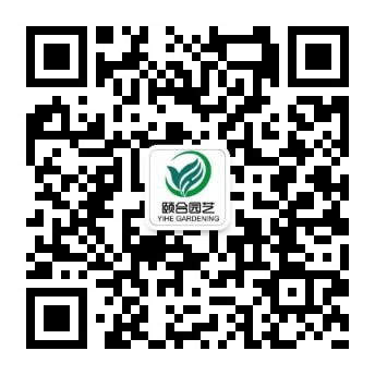 qrcode_for_gh_80894a51760d_344