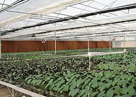 陳村花卉世界蘭花溫室大棚案例