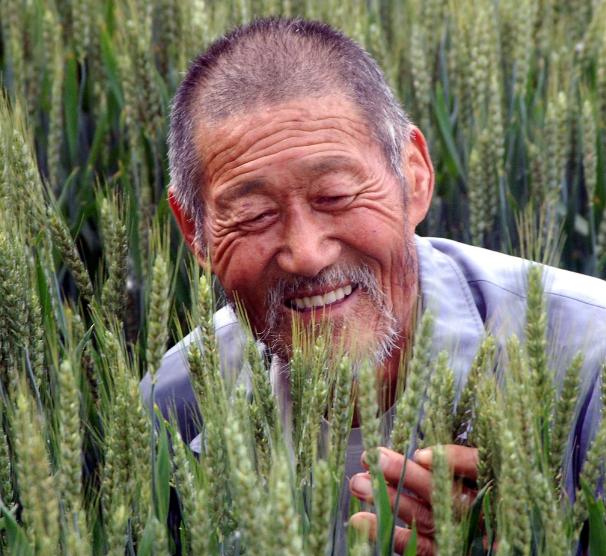 质嫩的小麦