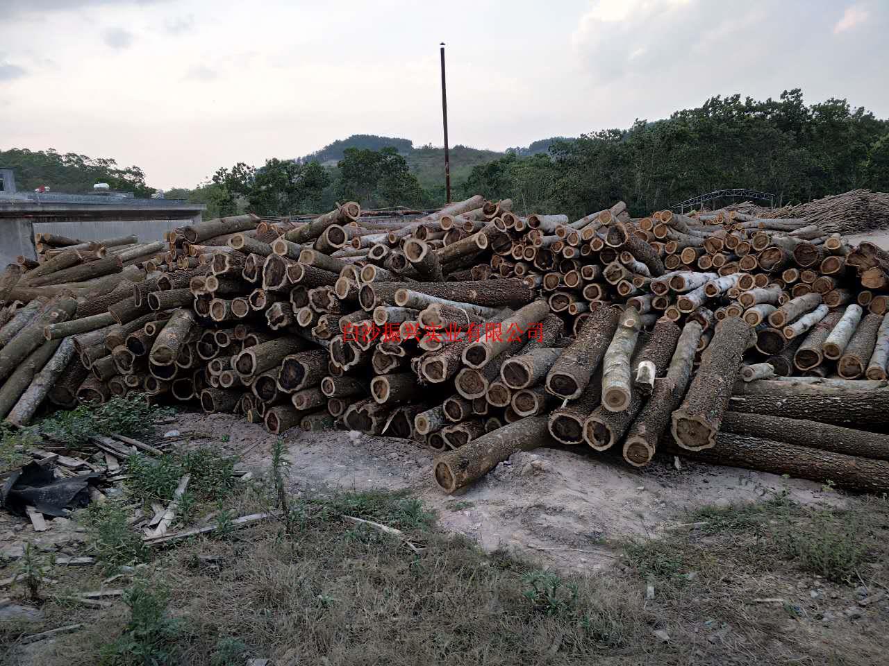 海南橡膠木