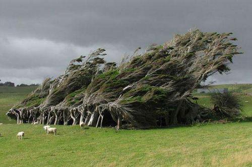 全球十大最美丽的树
