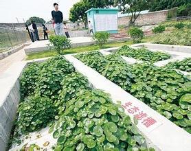 農村垃圾和農業廢棄物資源化關鍵技術