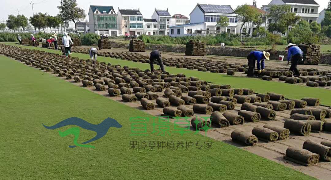 7宣璟草坪