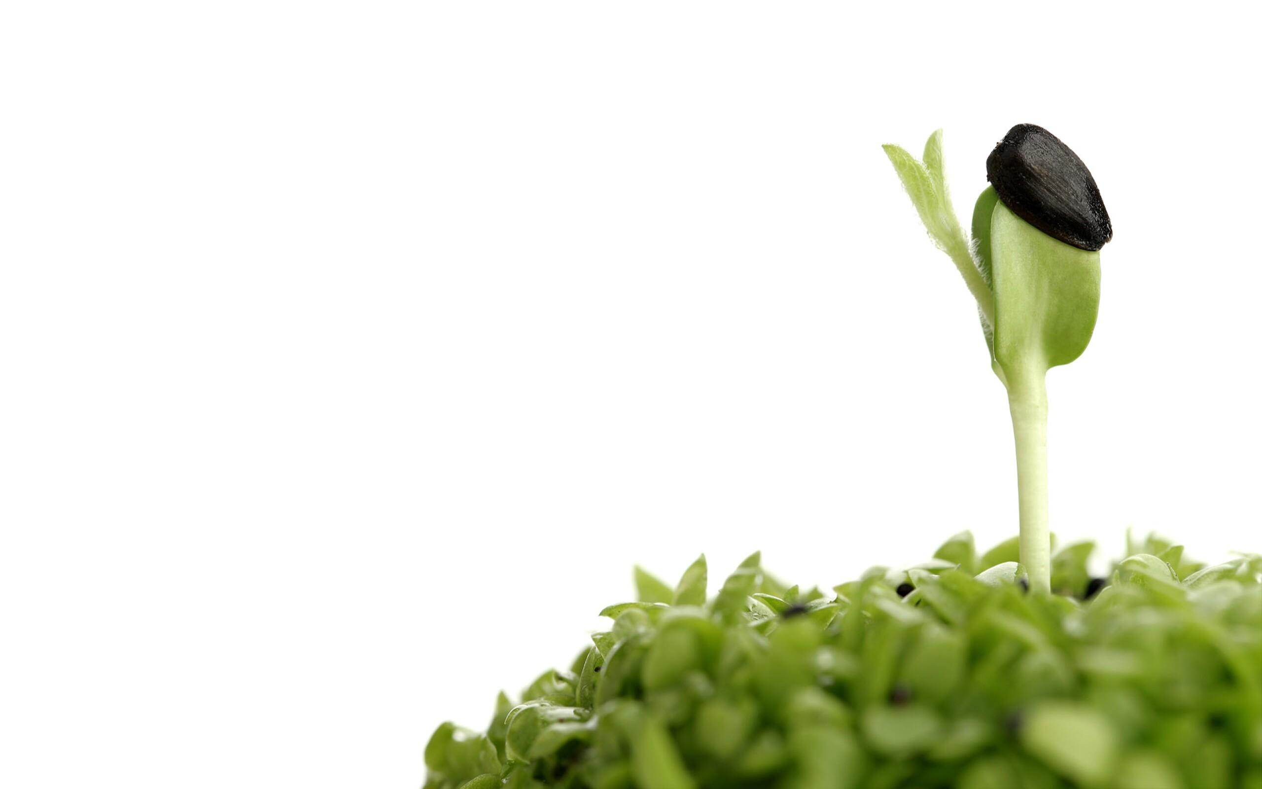 作物健康管理方案