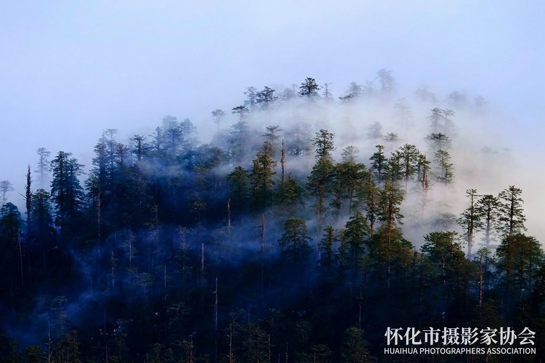 《飘在林中的云》杨志东