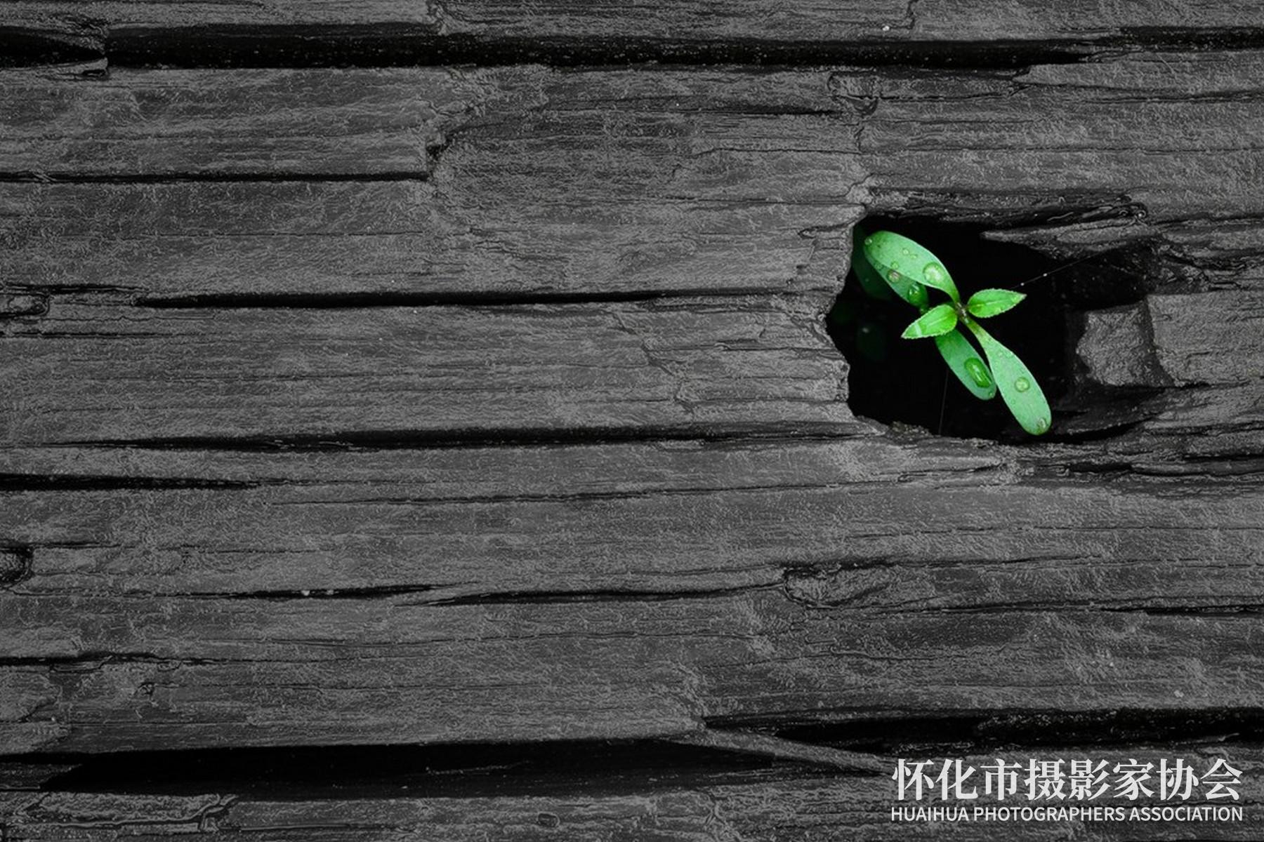 《生命礼赞》杨志东