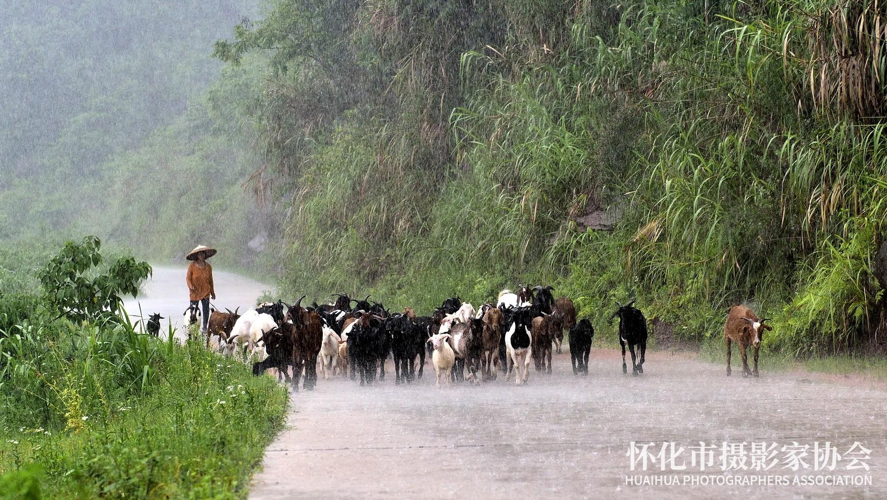 《雨牧》杨中华