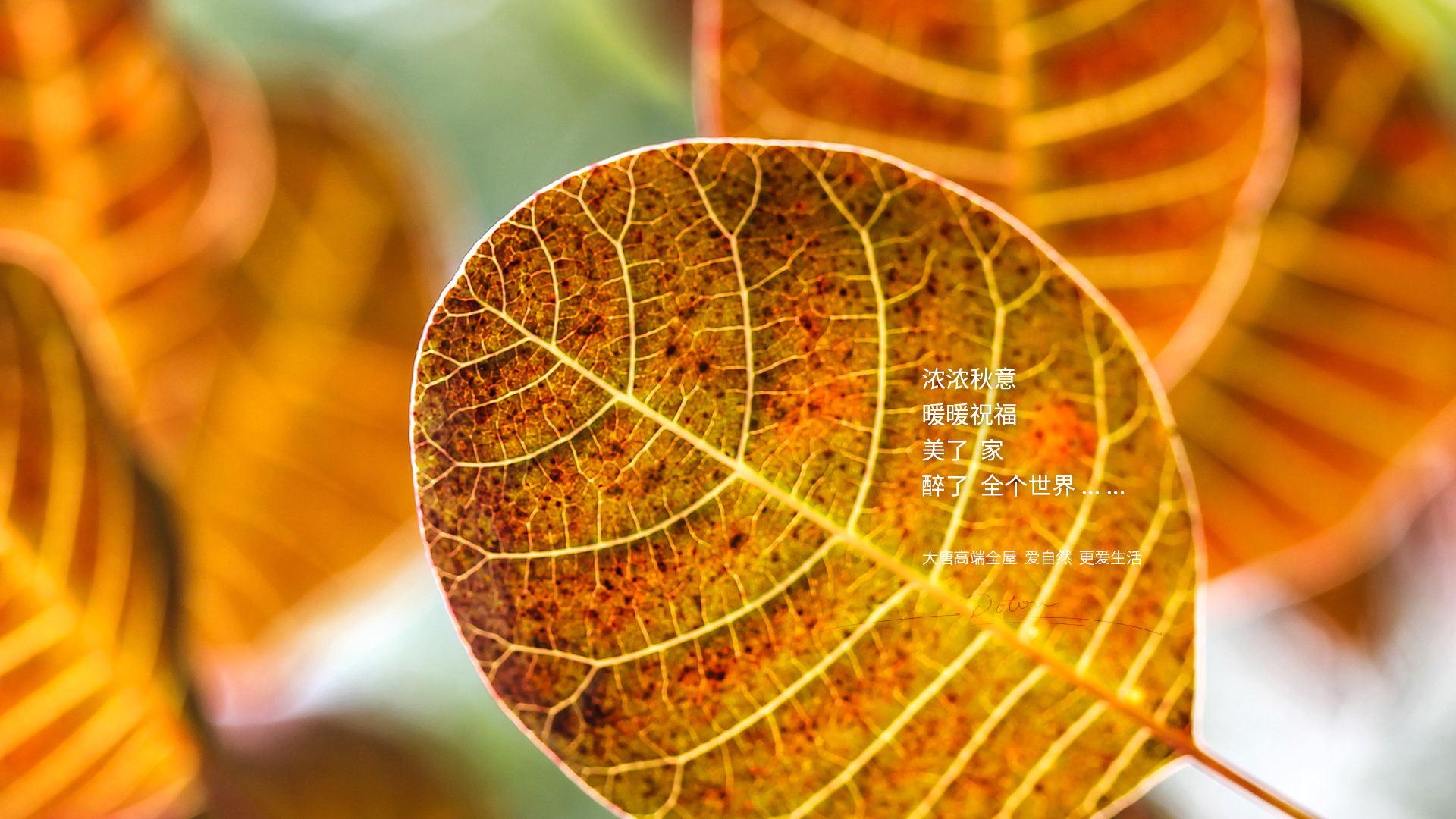 濃濃秋意暖暖祝福
