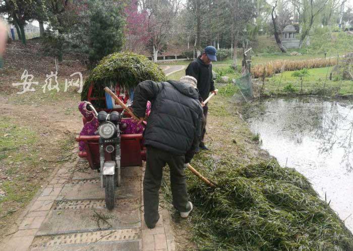 大量鱼类被放生蜀峰湾咬断水草-城管呼吁:关爱水生物