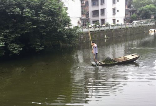 市区中山公园外河原本清澈见底,如今为何浑浊不堪?