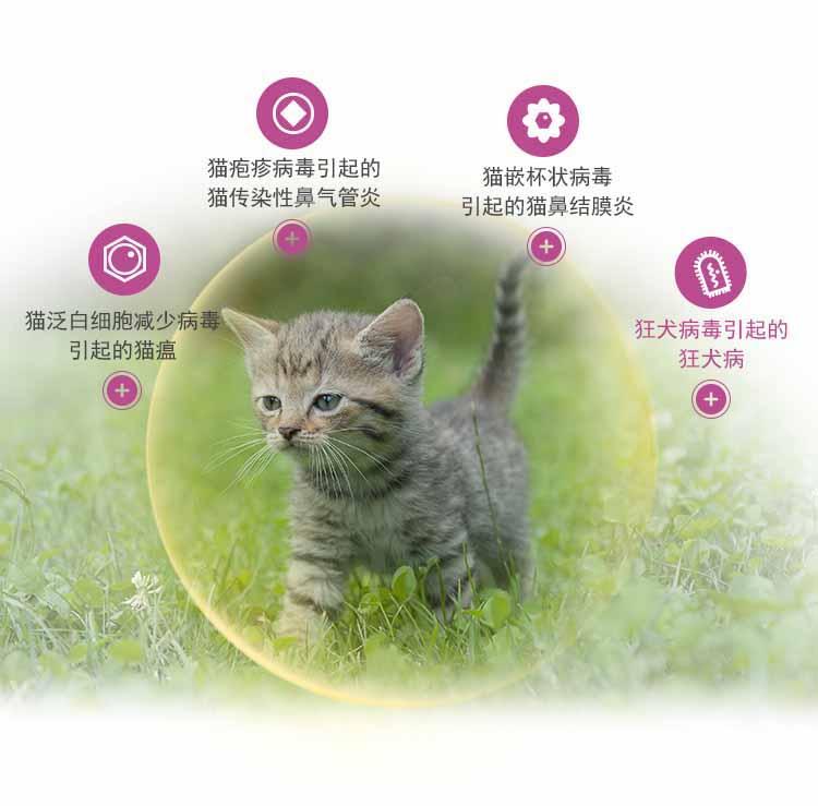 img_cat_class3_0