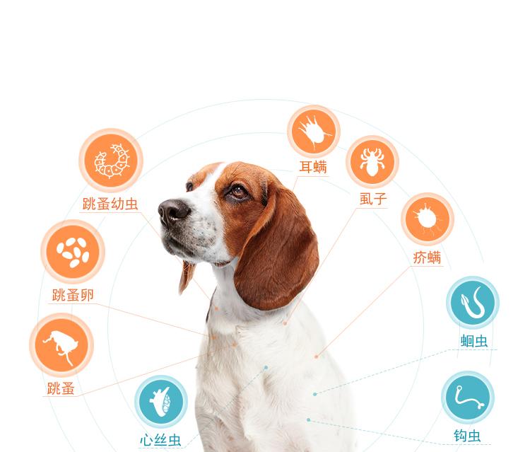 img_dog_class2_0