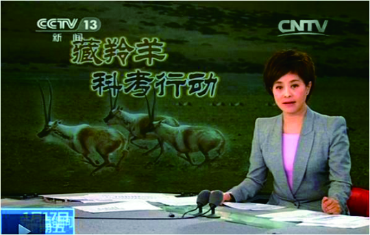 我們與藏羚羊科考行動3