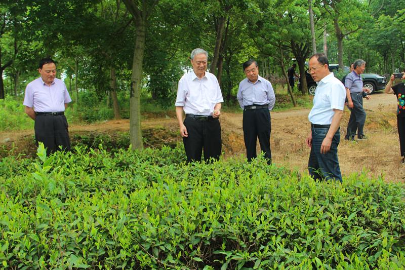 安徽省現代農業與新農村建設研究會 在茶業集團考察調研