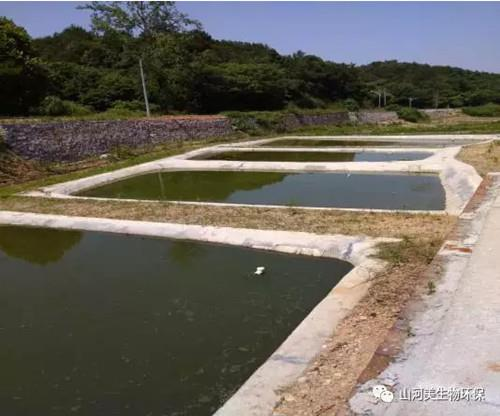 生態養殖零污染,花園式養殖之寧鄉竹溪壩養豬專業合作社