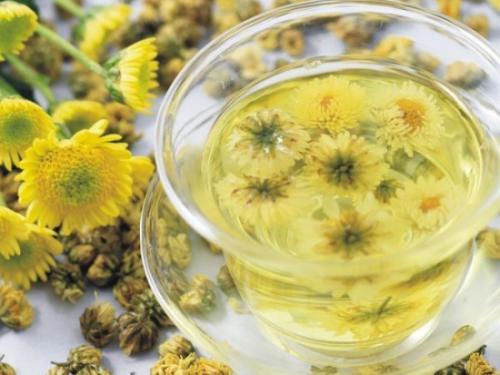 菊花茶可以天天喝嗎