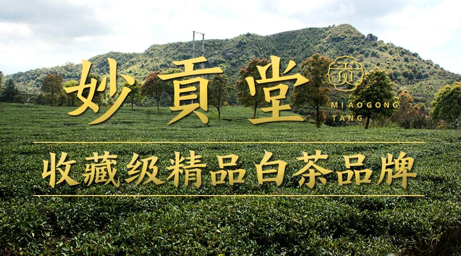 -未发布当下茶行业的最大风口之一:福鼎精品白茶-当下茶行业的最大风口之一:福鼎精品白茶-4
