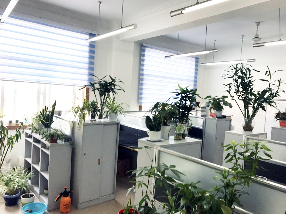 寻找最美办公室