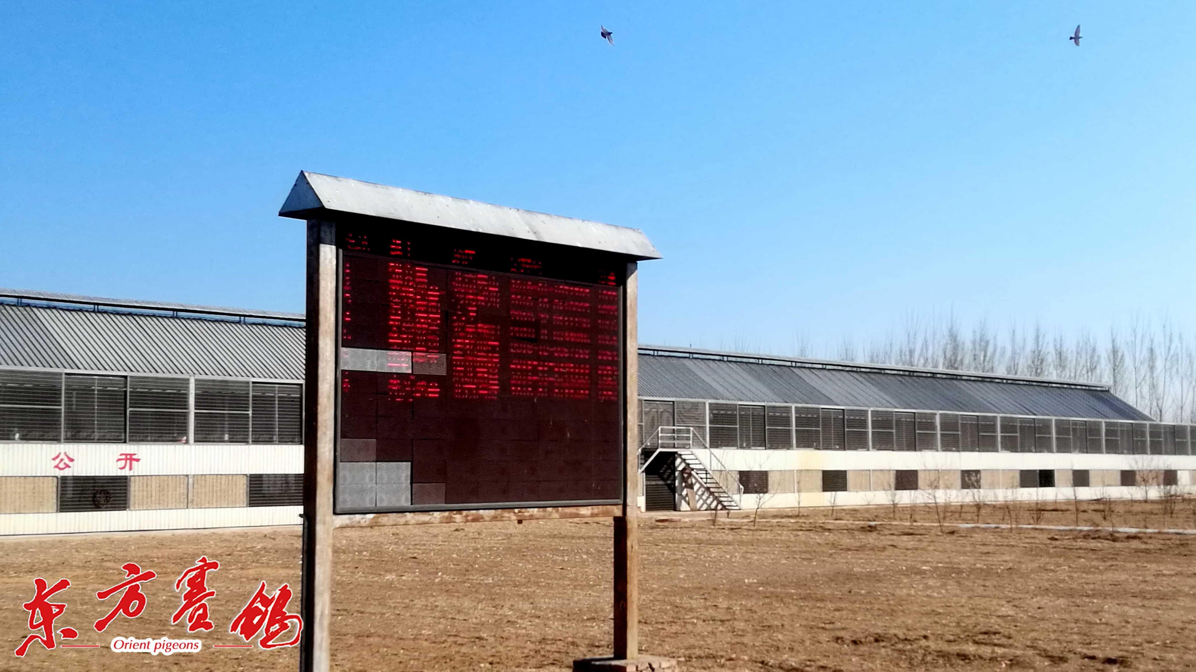 16、公棚电子显示屏实时播放即时归来的鸽子。