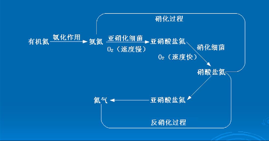 氨氮消化过程-陆恒生物