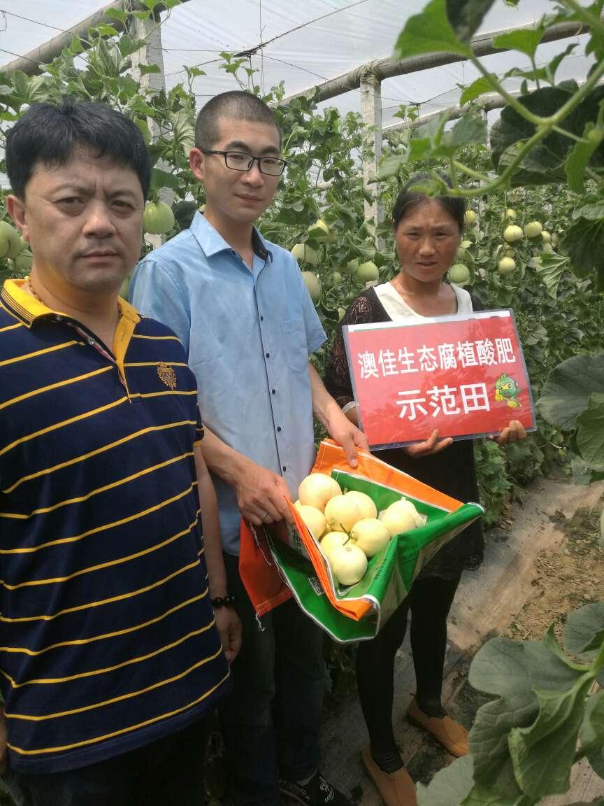 姜各庄周庄对比的香瓜