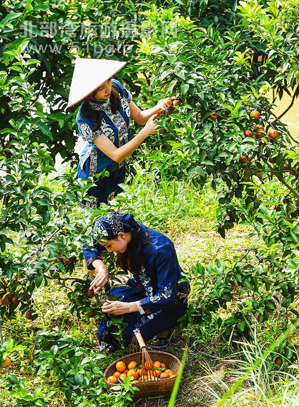 羅盛作品-桔柑成熟時-羅盛-15807709889-東興八一農莊