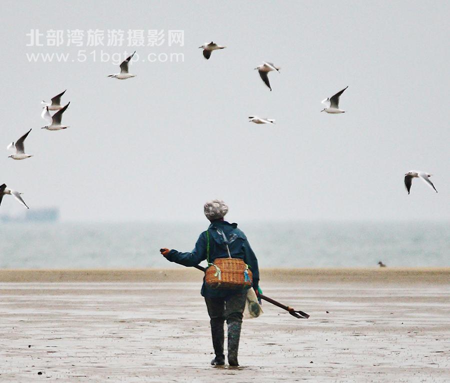 羅盛作品-海鷗飛處趕海人-羅盛-15807709889