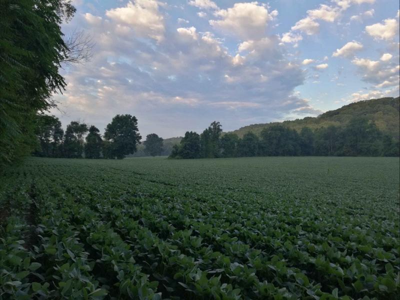 美国正源文稿及选图----09-001美国农场