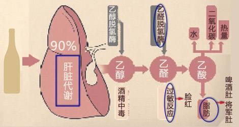 酒精基因檢測-4