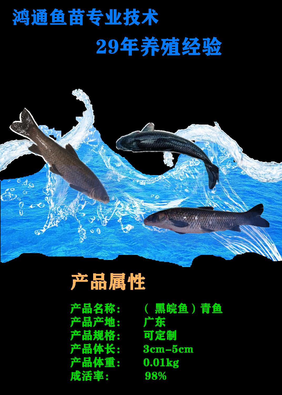 黑皖鱼1_副本