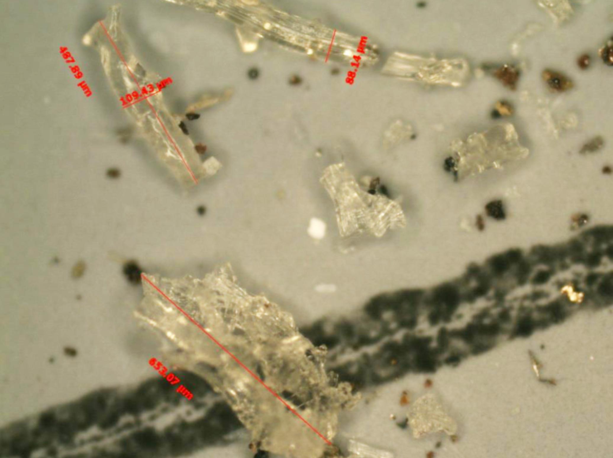 顯微鏡-圖片2