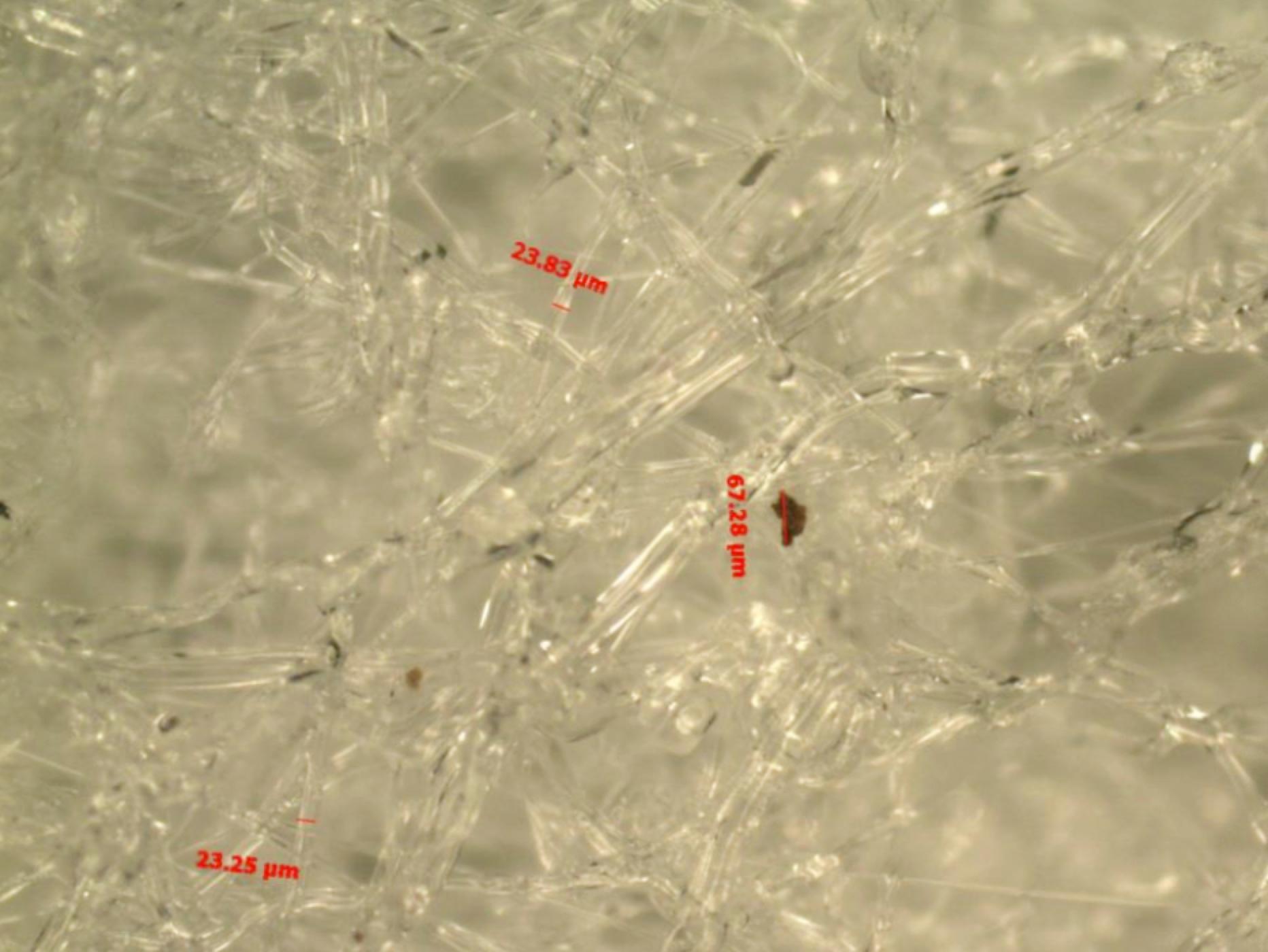 顯微鏡-圖片3