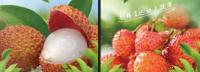 荔枝水果空運