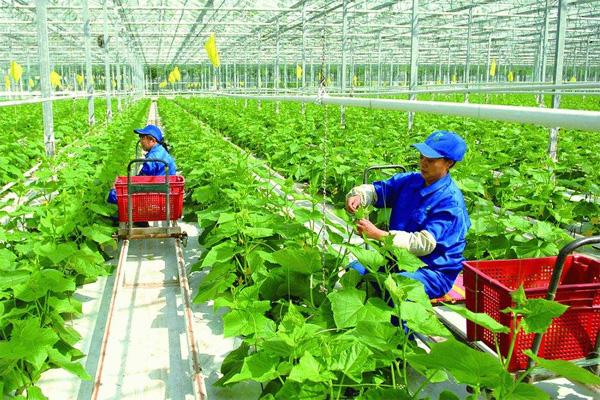 531蔬菜種植