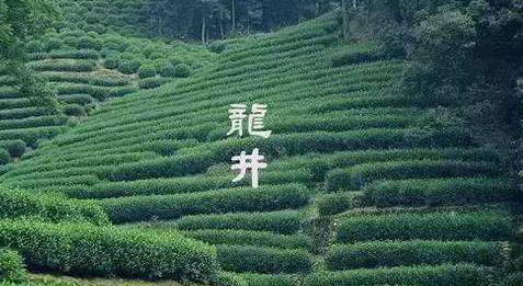 609龍井村