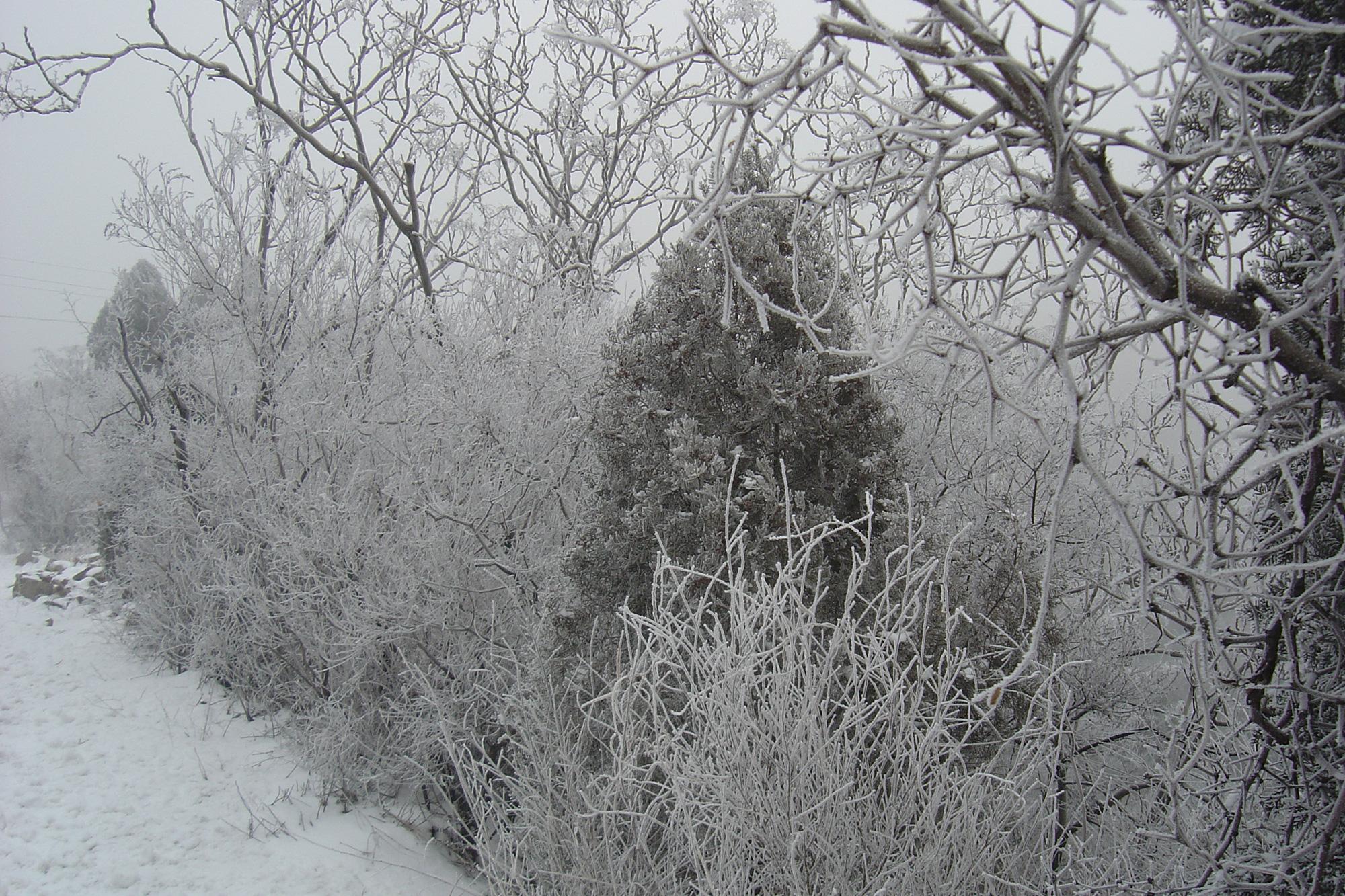 玉樹瓊花、晶瑩剔透的霧凇