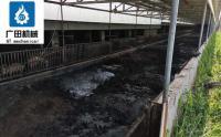 豬糞有機肥